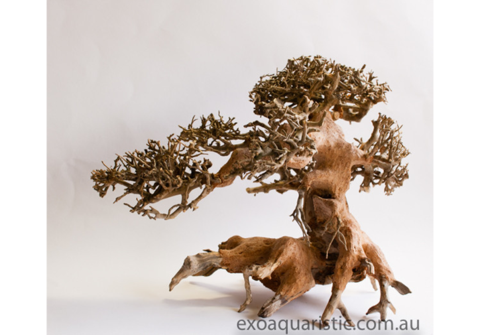 How to make driftwood bonsai
