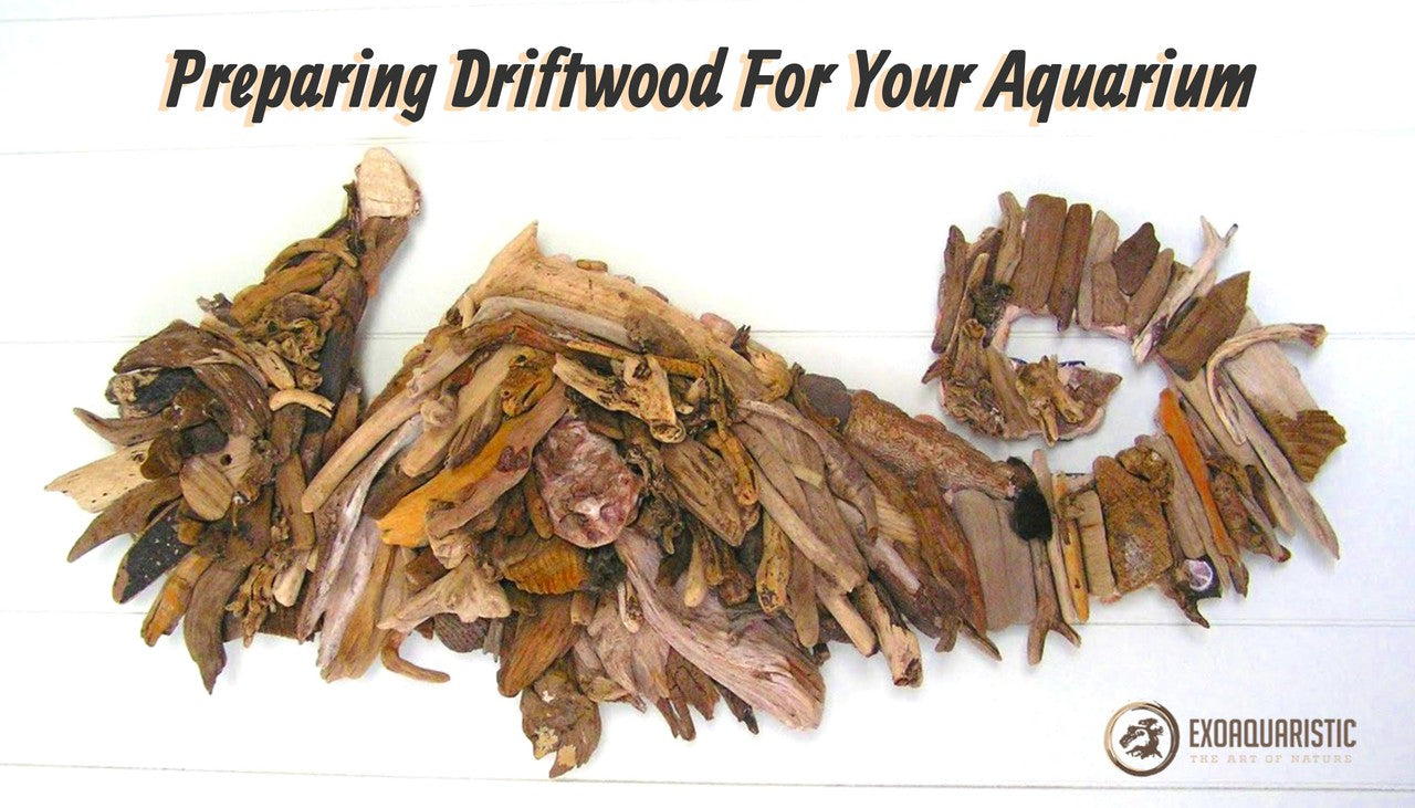 Best Driftwood Preparation for Aquarium