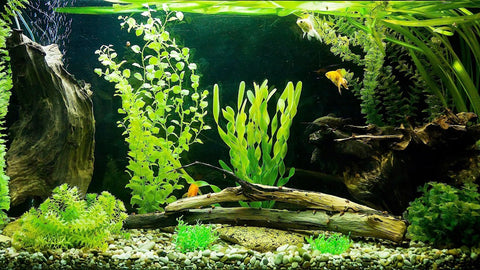 aquarium care tips