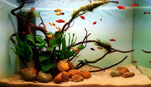 Simple style Aquascape