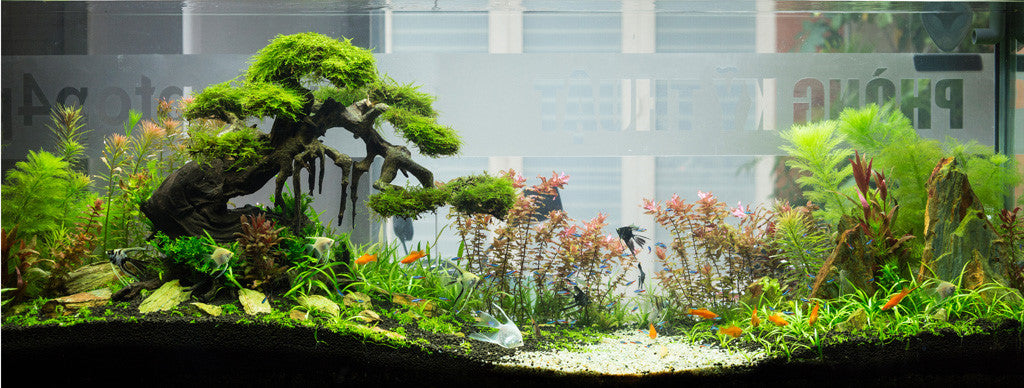 Aquarium plants that clean the water