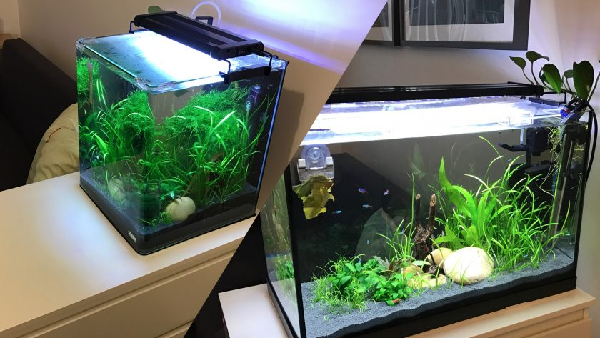 Mini Desktop Fish Tank
