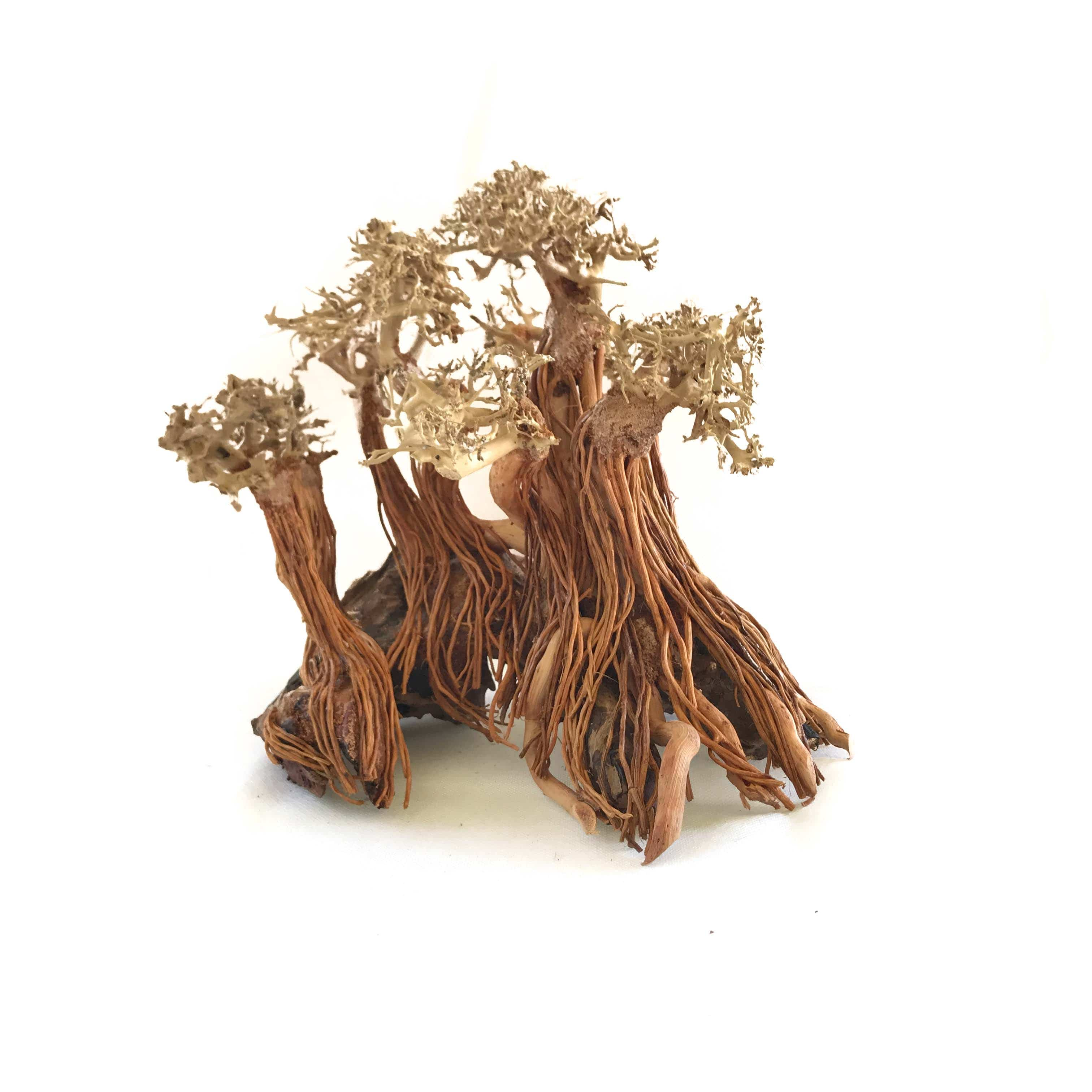 Micro Aquatic Shop Masterpiece Forest Style Bonsai Driftwood