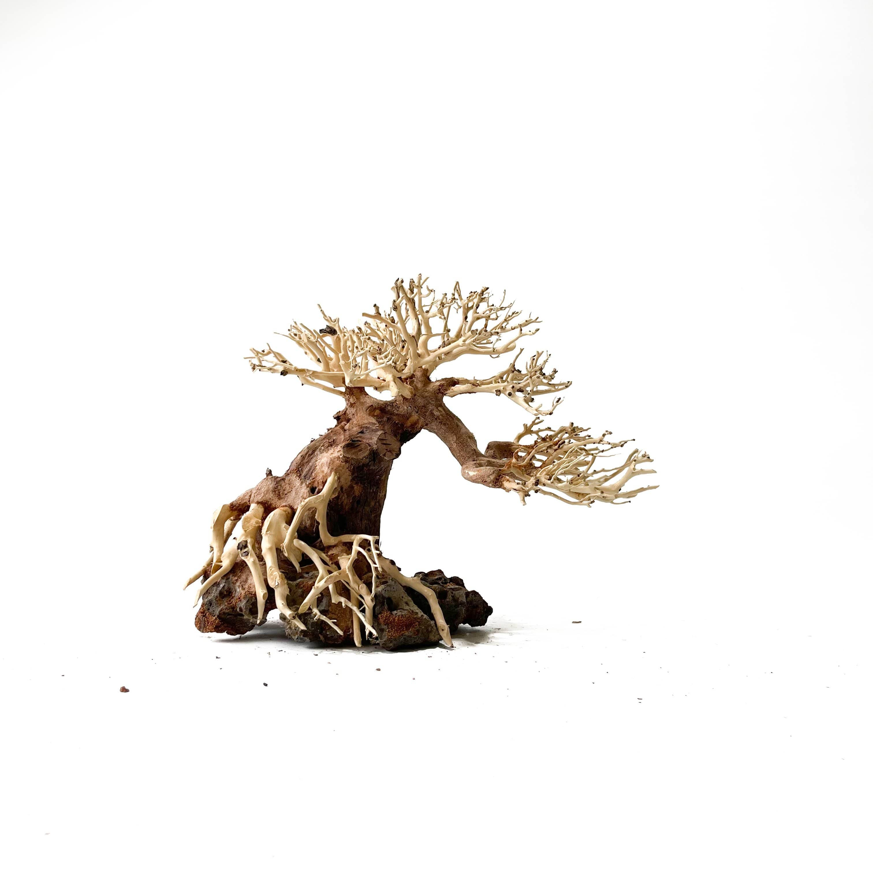 Micro Aquatic Shop Masterpiece Masterpiece Bonsai Driftwood - 25 x 30cm | 10