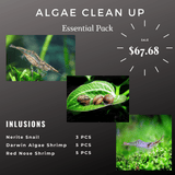 Algae Clean Up Essential Pack - Nerite Snails, Darwin algae shrimp, Red nose shrimp