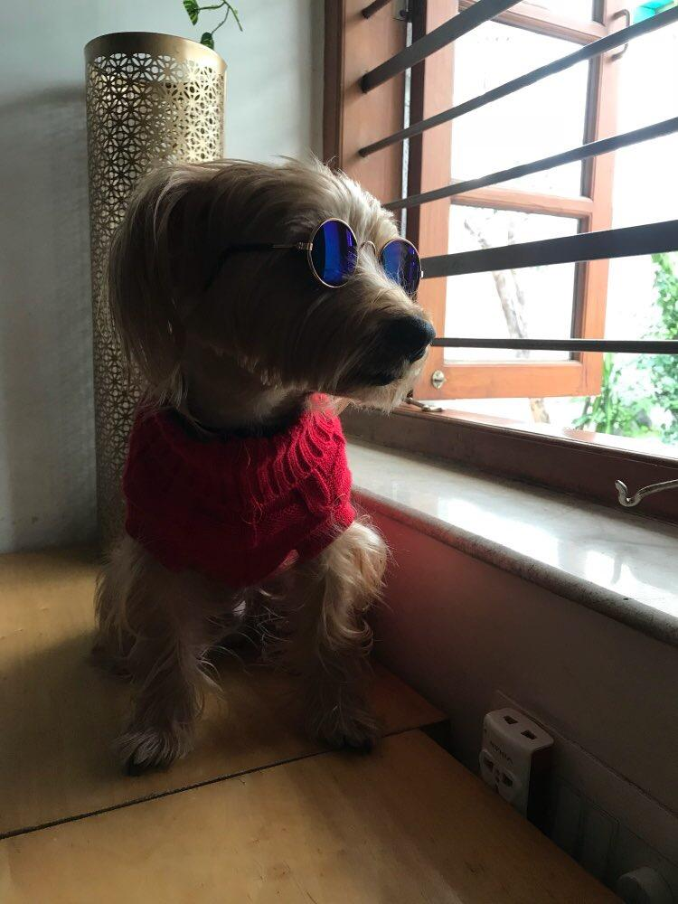 Perfect Pooch Sunglasses