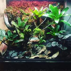 Custom Tropical Vivarium (Deposit fee)