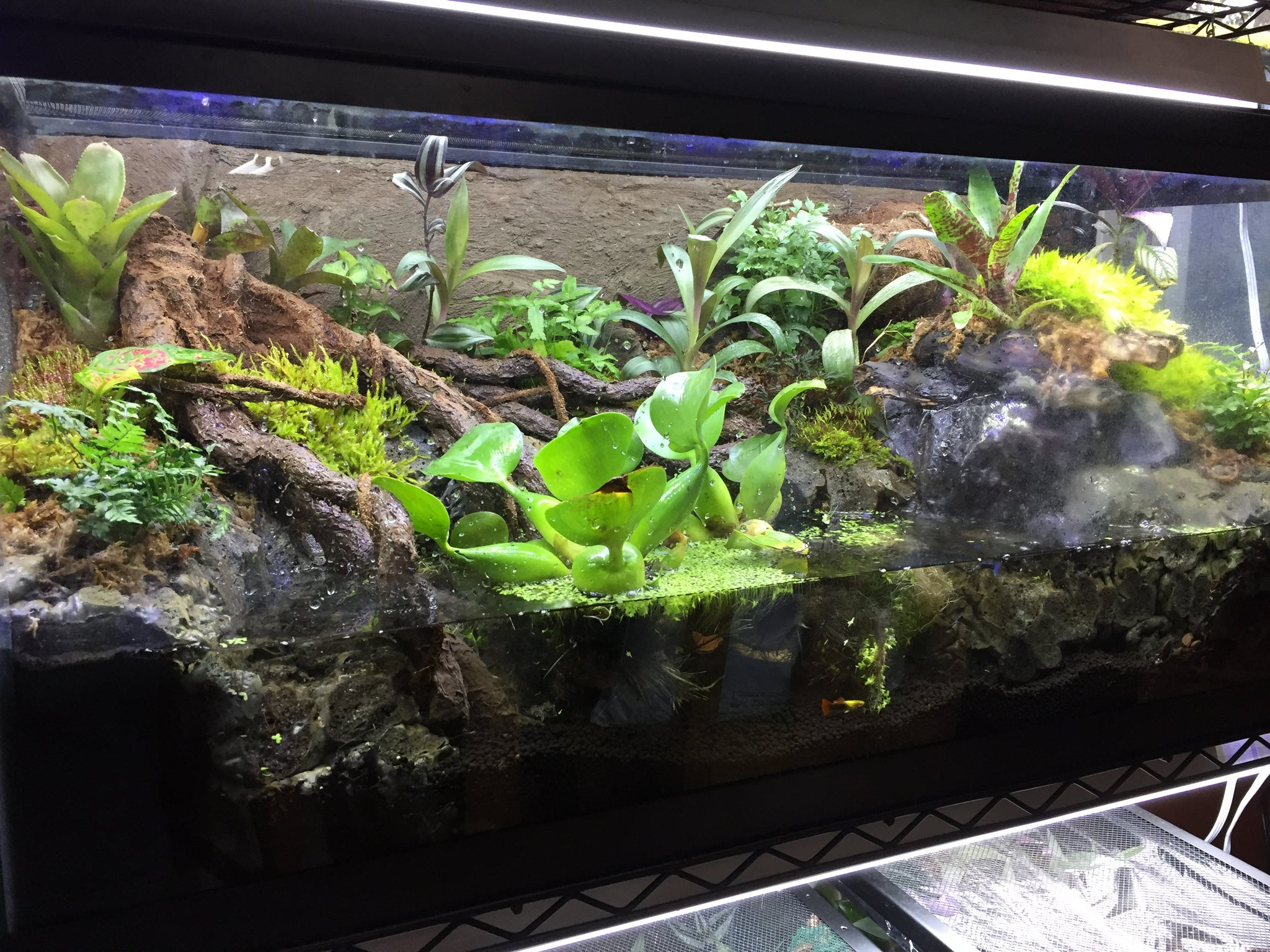Custom Paludarium (Deposit fee)