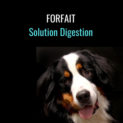 Forfait Solution Digestion