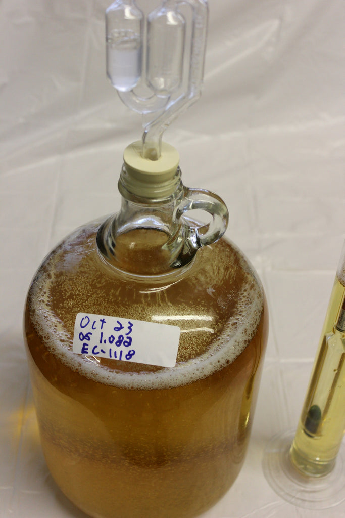 fermentation hard cider