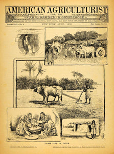 1890 Cover American Agriculturist Farm Life India Cattle Livestock AAG1