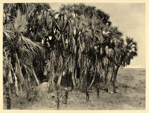 1930 Nuer Hunters Men Sudan Africa Hugo Adolf Bernatzik - ORIGINAL AF1