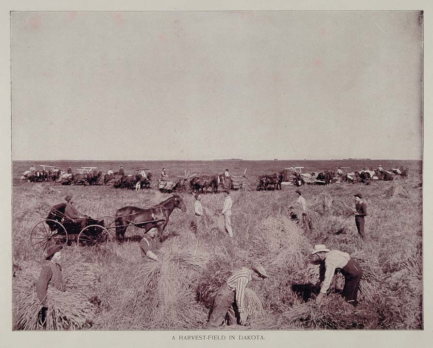 1893 Print Wheat Harvest Dakota Prairie Agriculture - ORIGINAL HISTORIC AW2