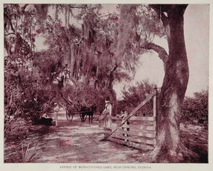1893 Spanish Moss Oaks Road Buggy Ormond Florida Print - ORIGINAL AW2