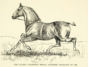 1896 Wood Engraving Walter Gilbey Champion Hackney Stallion MP For Sussex CCG2