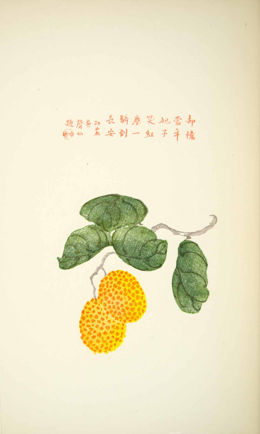 1953 Lithograph Chinese Art Lichih Lychee Fruit Twig Leaf Yellow Orange Green