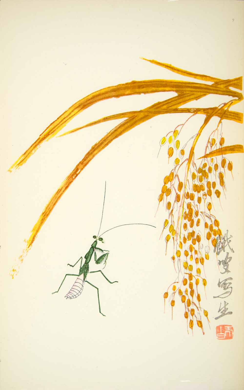1953 Lithograph Chinese Praying Mantis Millet Grain Nature Grass Golden Cricket - Period Paper