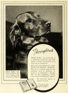1938 Ad Sweet Caporal Cigarettes Irish Setter Mrs. M. A. Thomson Montreal CHA1