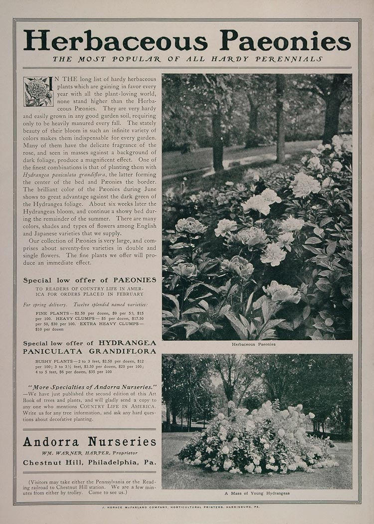 1902 Ad Andorra Nurseries Herbaceous Peony Hydrangea - ORIGINAL ADVERTISING CL1