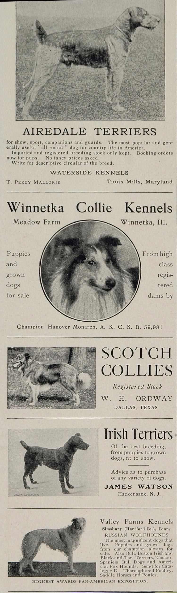 1902 Ad Airedale Terrier Scotch Collie Borzoi Breeders - ORIGINAL CL1