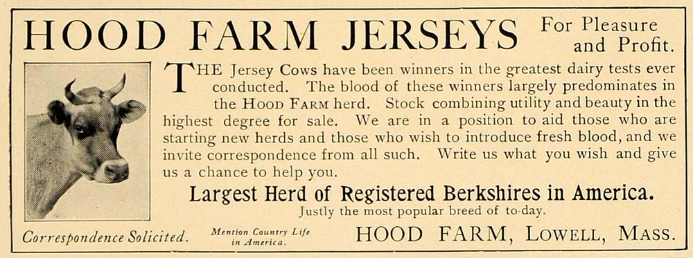 1906 Ad Hood Farm Jersey Cows Berkshires Lowell Mass - ORIGINAL ADVERTISING CL4