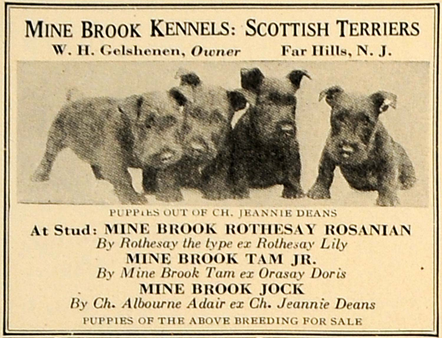 1923 Ad Mine Brook Kennels Scottish Terriers Gelshenen - ORIGINAL CL4