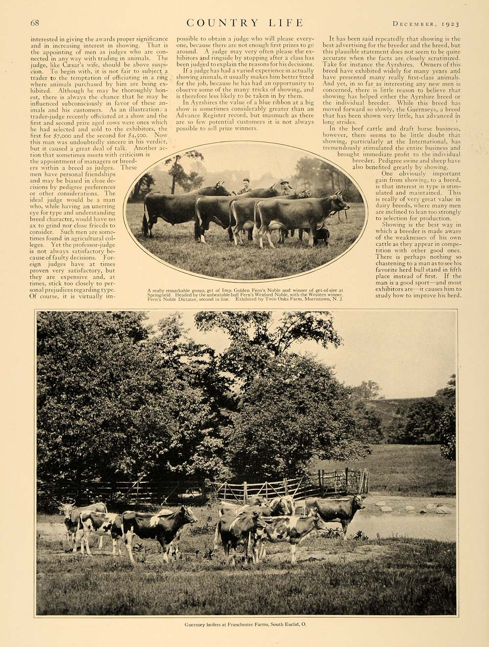 1923 Article Blue Ribbon Jersey Guernsey Dairy Cows - ORIGINAL CL5