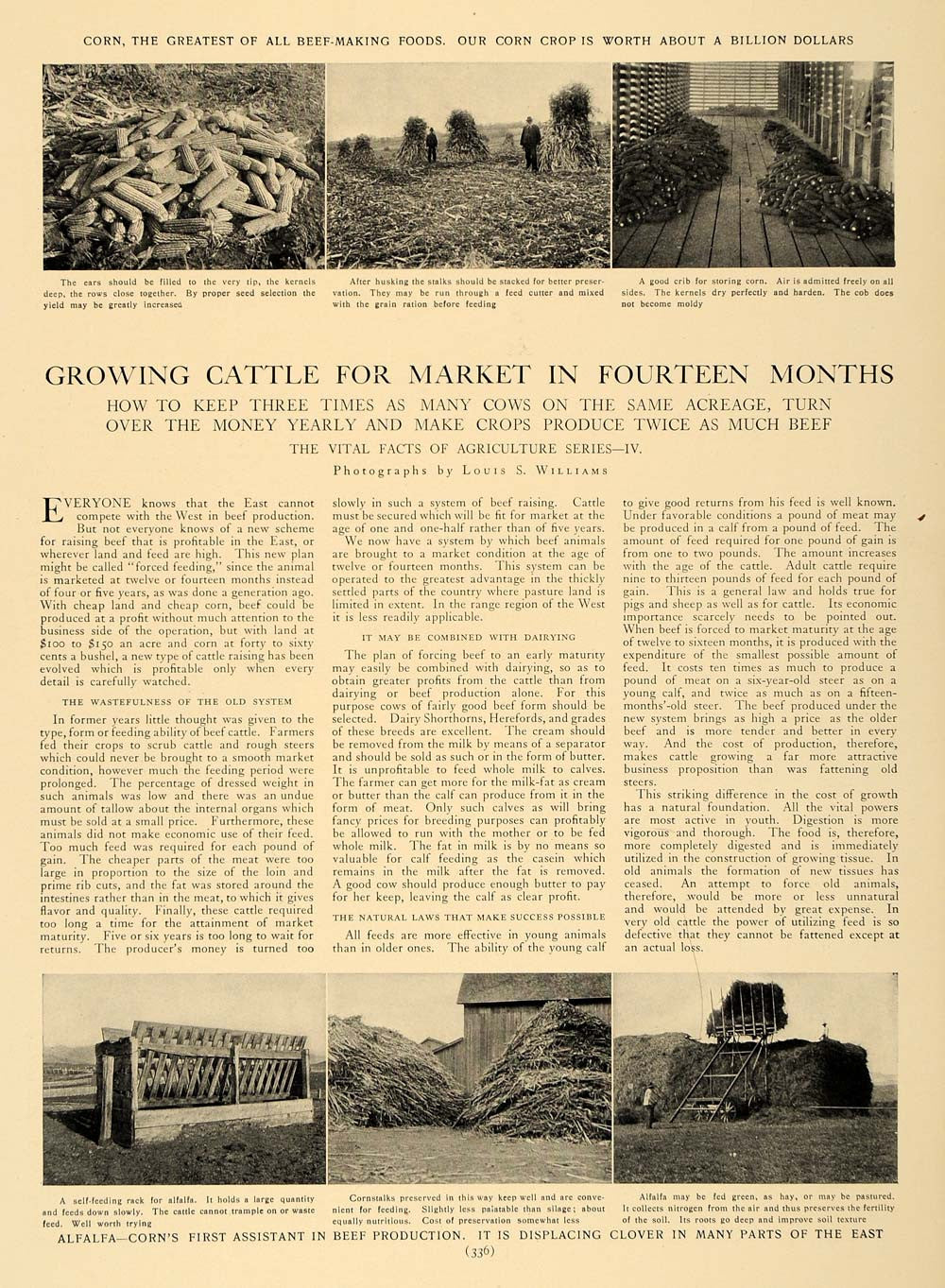 1905 Article Corn Alfalfa Raising Cattle Agriculture - ORIGINAL CL5 - Period Paper  - 1