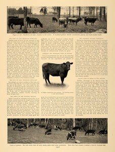 1905 Article Corn Alfalfa Raising Cattle Agriculture - ORIGINAL CL5 - Period Paper  - 2