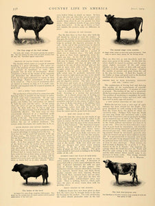 1905 Article Corn Alfalfa Raising Cattle Agriculture - ORIGINAL CL5 - Period Paper  - 3