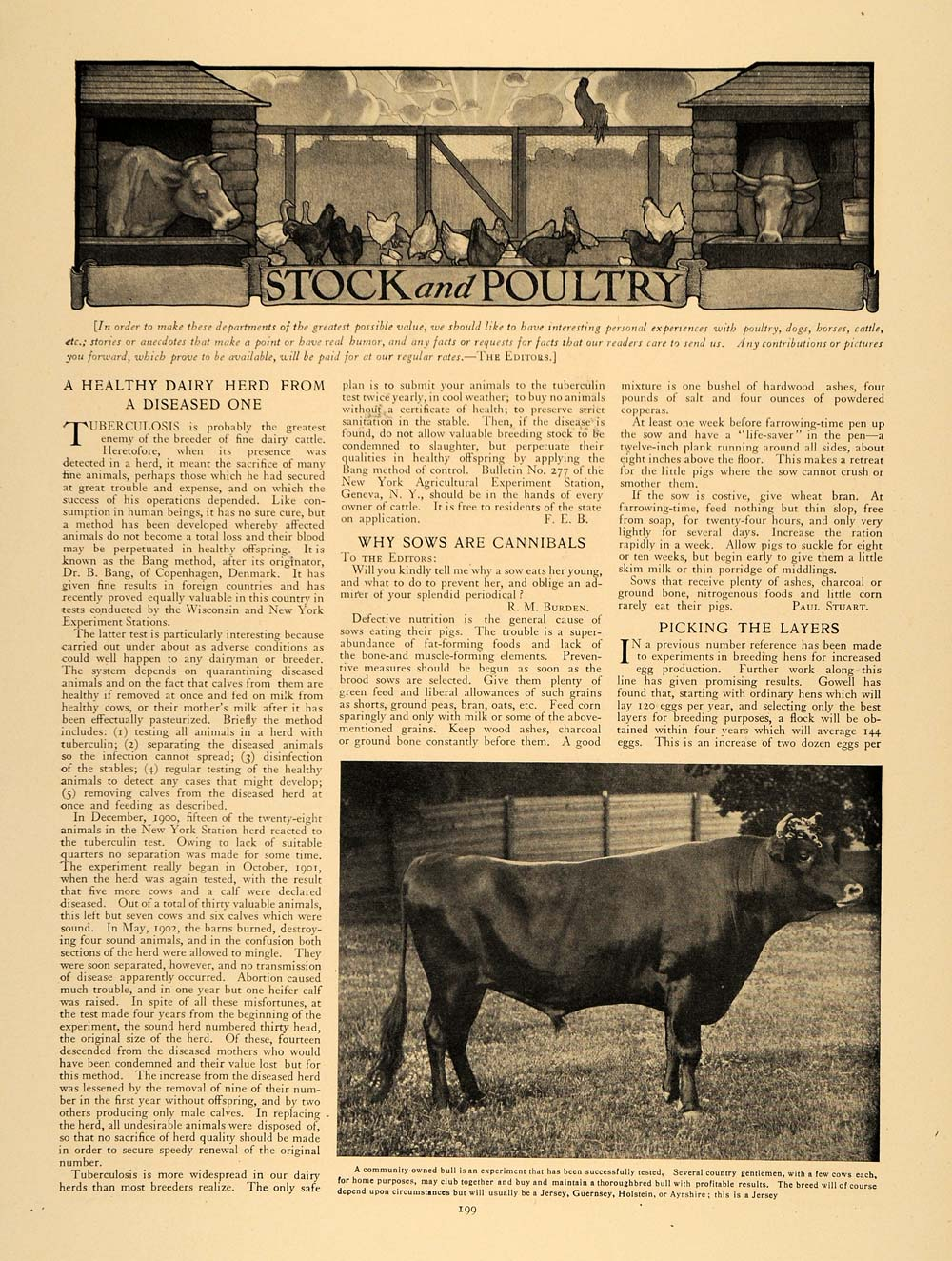 1907 Article Cattle Disease Sow Cannibals R. M. Burden - ORIGINAL CL9