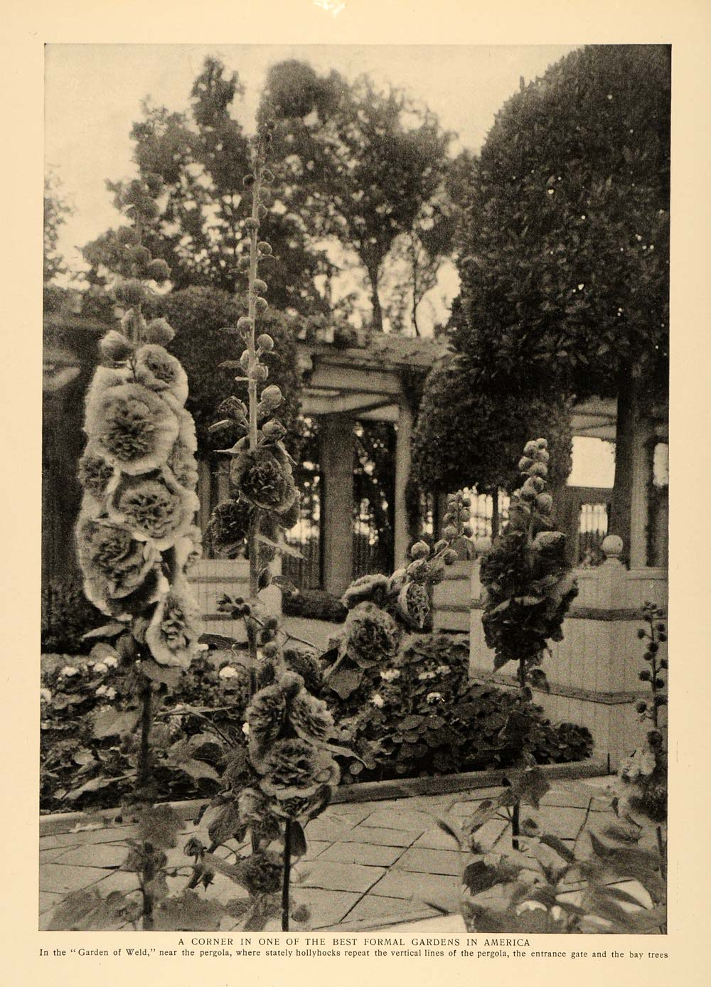 1905 Print Garden of Weld Pergola Hollyhocks Bay Trees ORIGINAL HISTORIC CL9