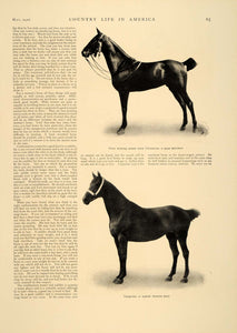 1906 Article Buying Horse Pony Charles Sawyer Equine Farm Paheton Carriage CLA1