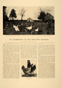 1906 Article Poultry Farming Chicken Rooster Turkey Eggs Agriculture CLA1