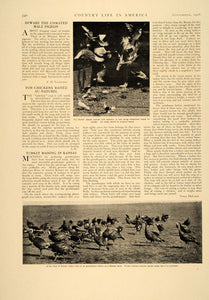 1906 Article Stock And Poultry Farming Agriculture Barn Animals Care Cows CLA1