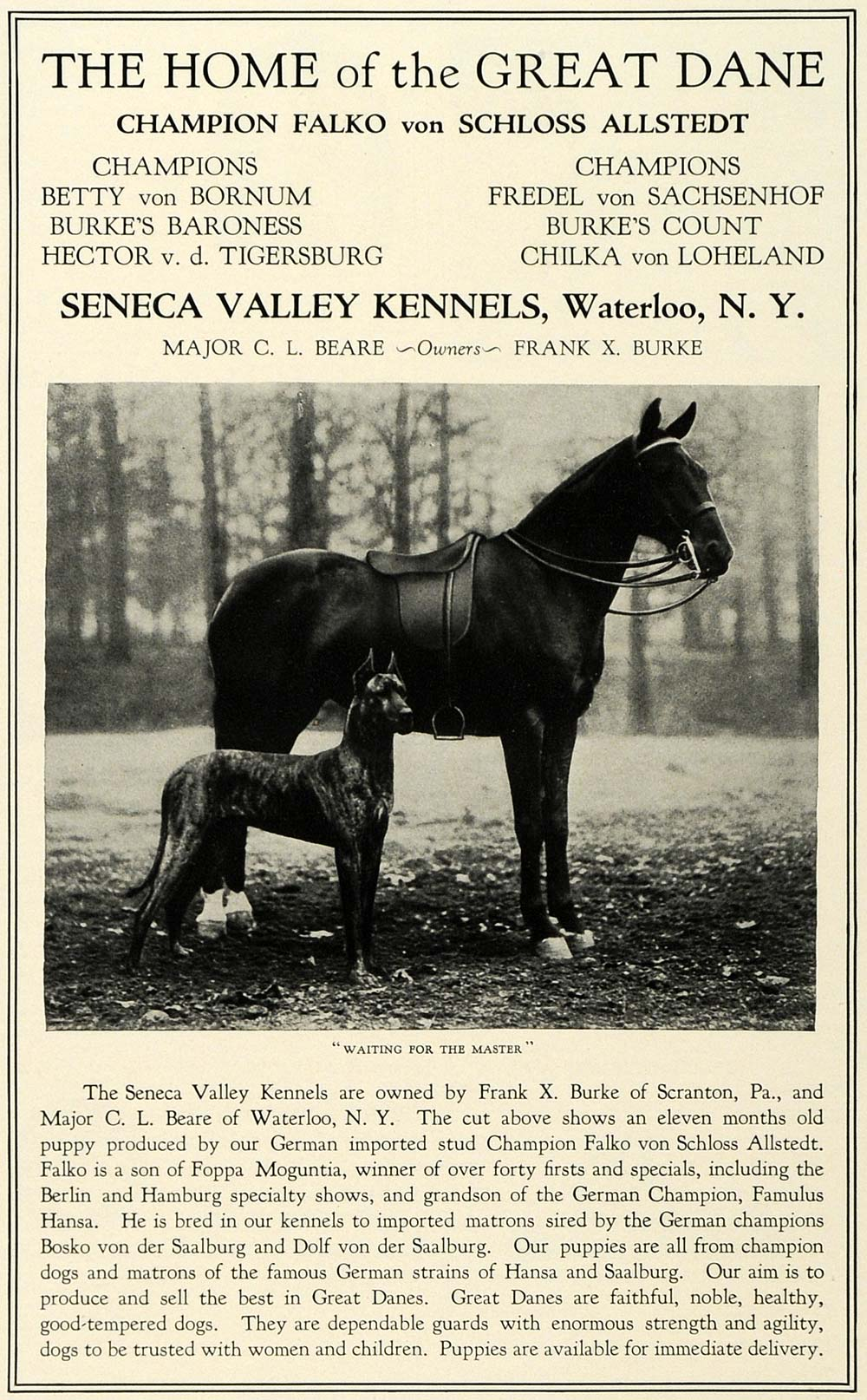1930 Ad Great Dane Dog Pets Breeders Seneca Valley Kennels Waterloo New COL2