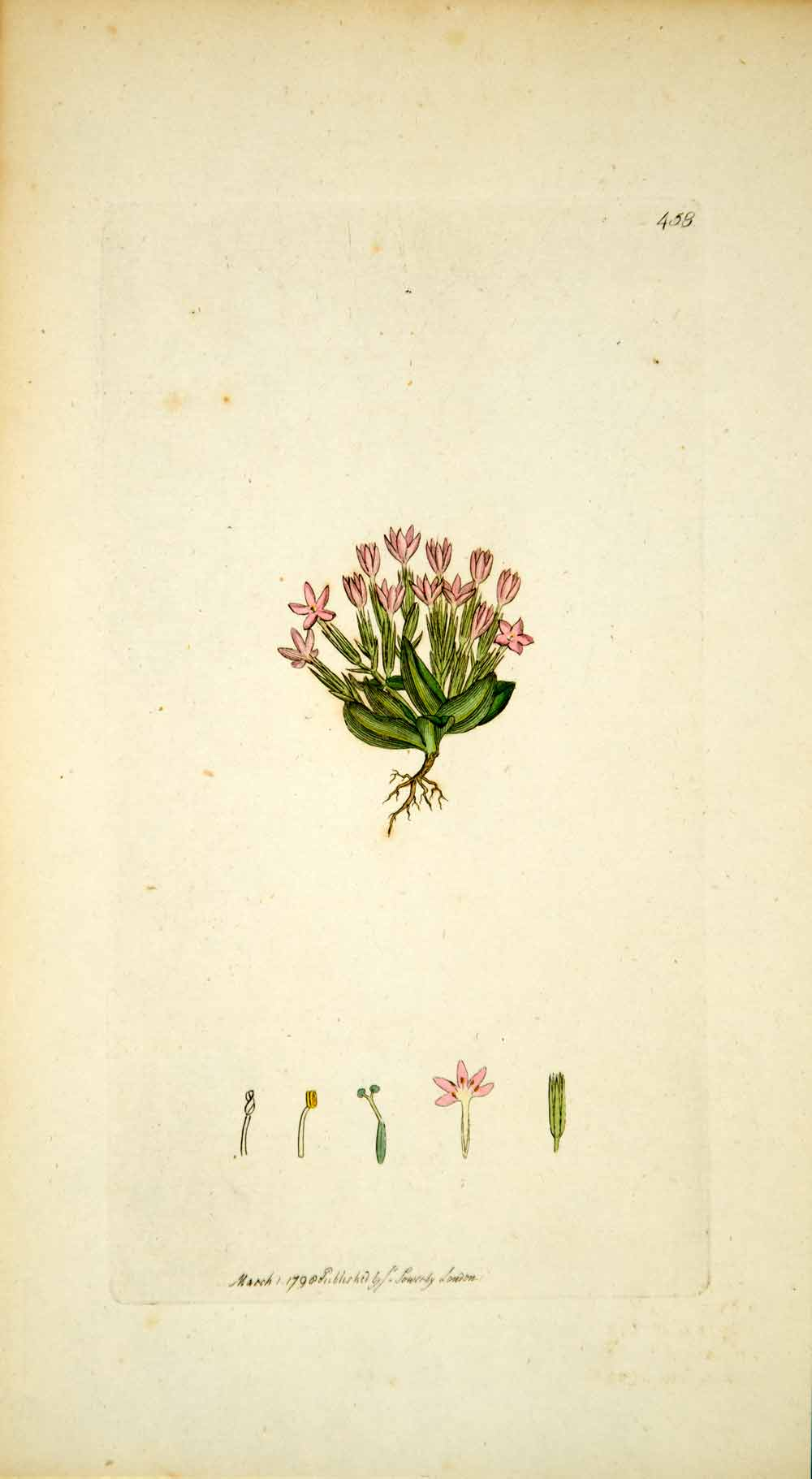 1798 Copper Engraving Hand-Painted Chironia Dwarf Branched Centaury Botany EB7