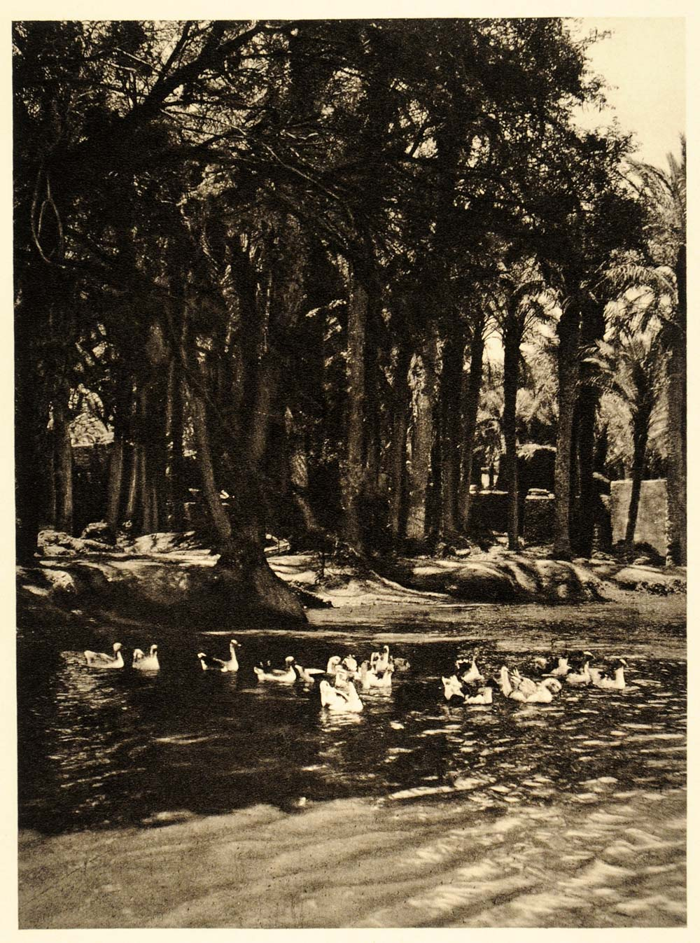 1929 Faiyum Fayum Oasis Egypt Palm Trees Pond Ducks - ORIGINAL PHOTOGRAVURE EG1