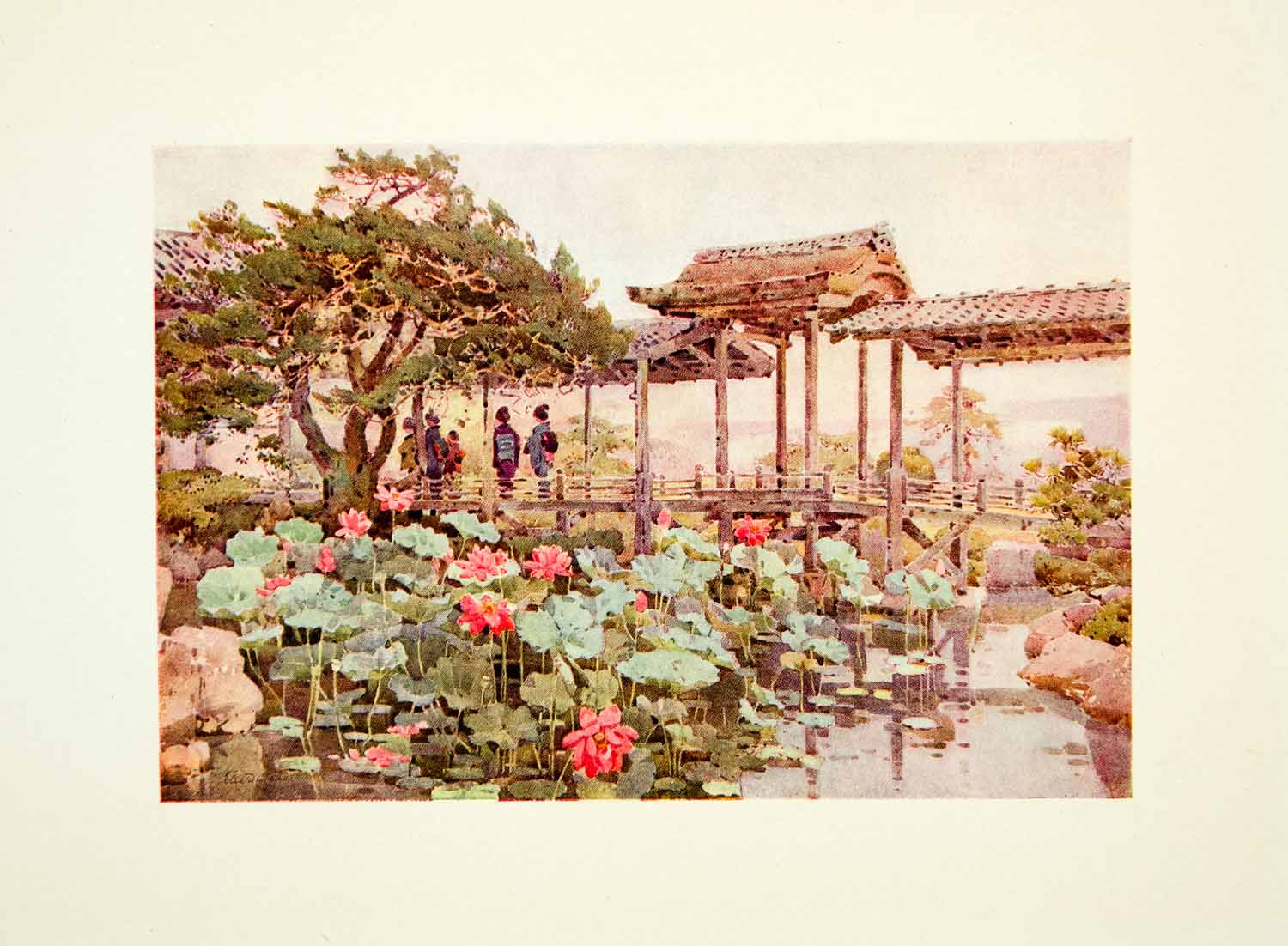 1908 Color Print Lotus Kodaiju Ella Du Cane Flower Lily Pad Pond Japan FGJ1
