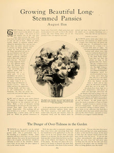 1926 Article Gardening Pansies Pansy Bouquet August Ihm - ORIGINAL GHB1