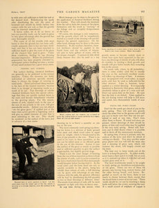 1907 Article Restoring Lawn Leonard Barron Maintaining - ORIGINAL GM1
