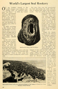 1920 Article Seal Rookery Pribilof Island Animal Skins - ORIGINAL ILW2
