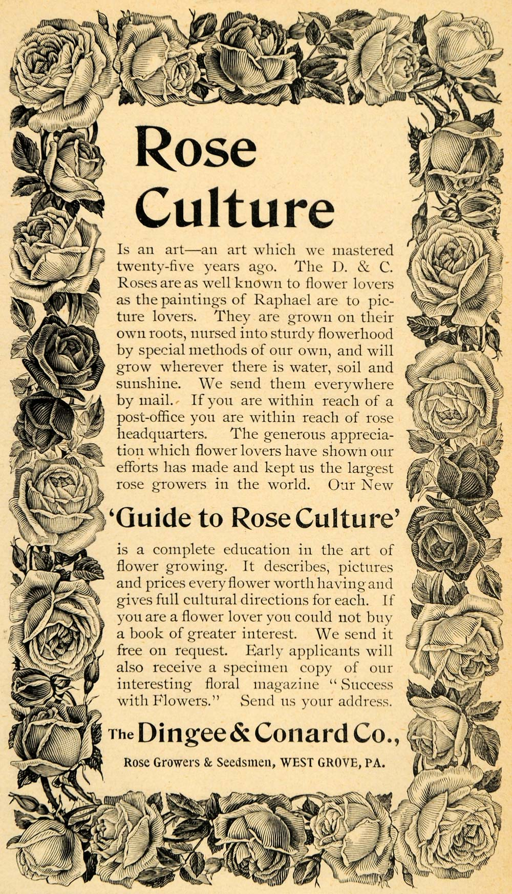 1893 Ad Dingee Conard Co. Rose Growers Culture Flowers Seedsman Seed LHJ4