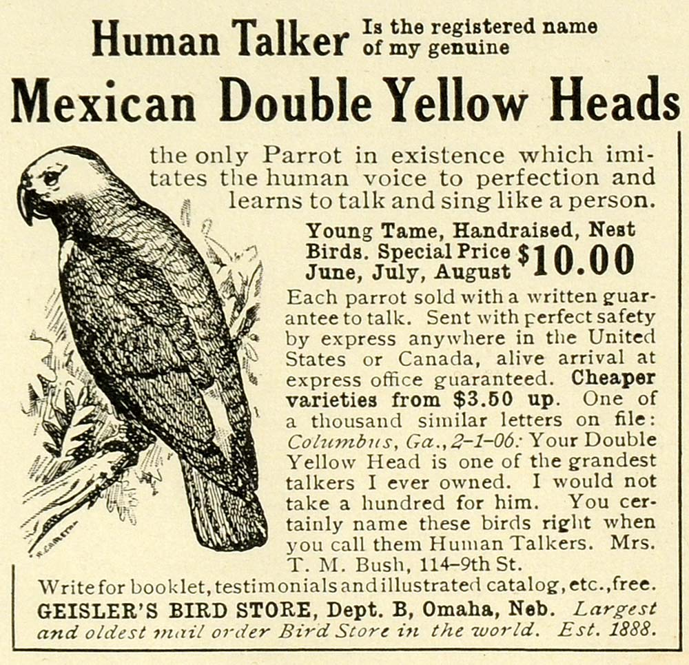1906 Ad Geisler's Bird Store Mexican Double Yellow Head Talking Parrot Pet LHJ6