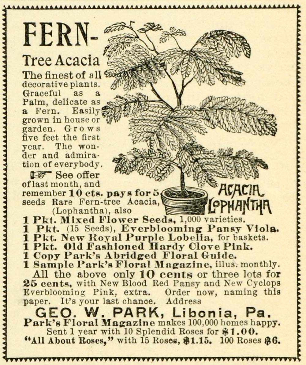 1893 Ad George W. Park Tree Plant Flower Gardening Seeds Agriculture LHJ6