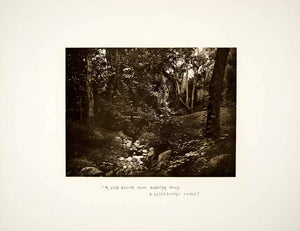 1887 Photogravure Pocantico River Brook Landscape Sleepy Hollow NY Forest LSH1