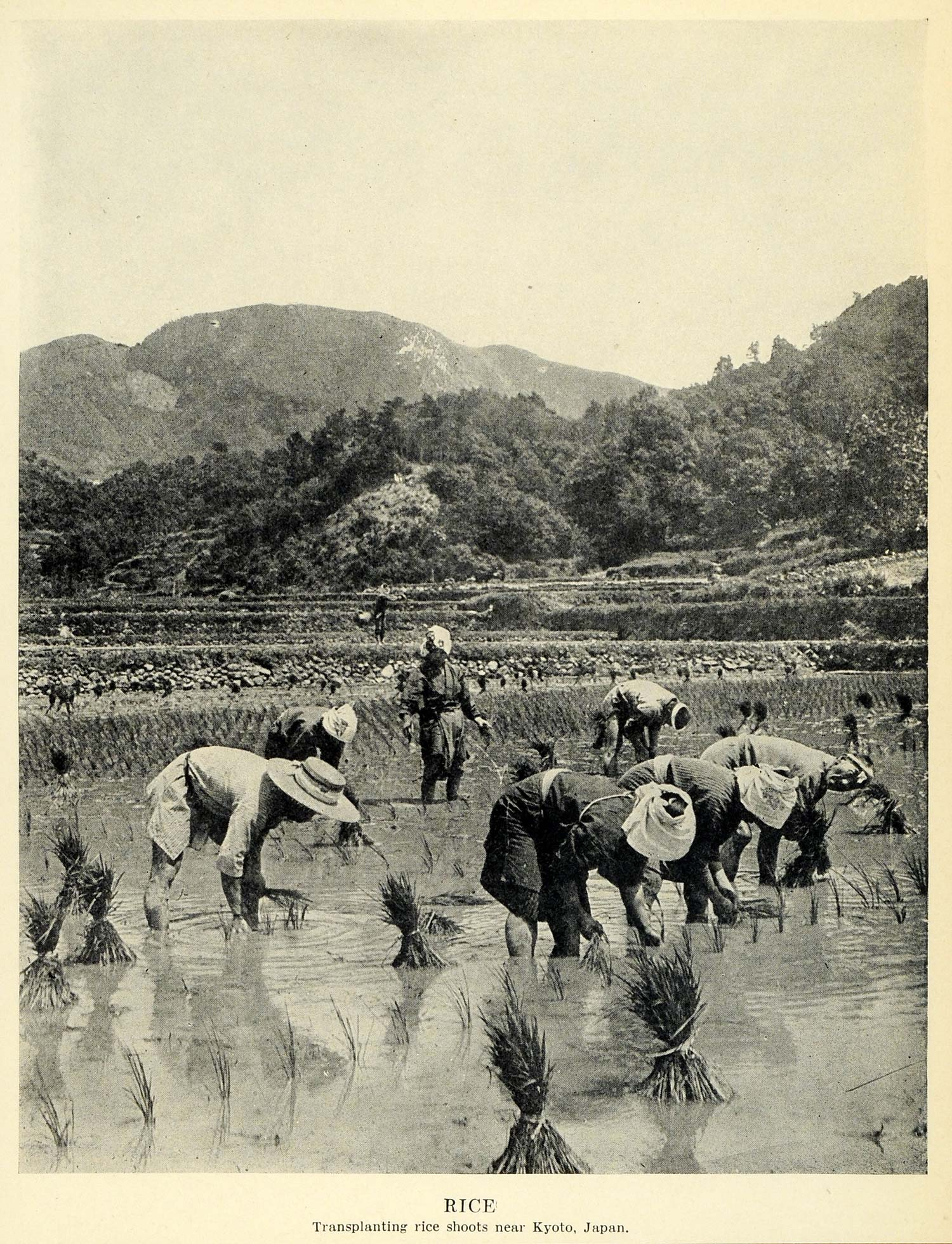 1931 Print Kyoto Japan Rice Paddy Fields Harvest Agriculture Japanese NCAW1