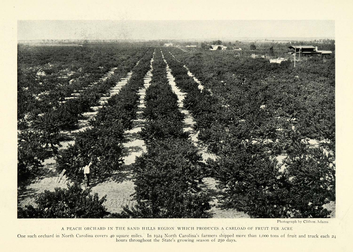 1926 Print Sand Hills North Carolina Peach Orchard Farming Crops NGM1
