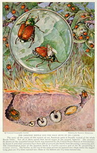1929 Color Print Life Cycle Japanese Beetle Larva Egg Insect Bug Image Fly NGM9