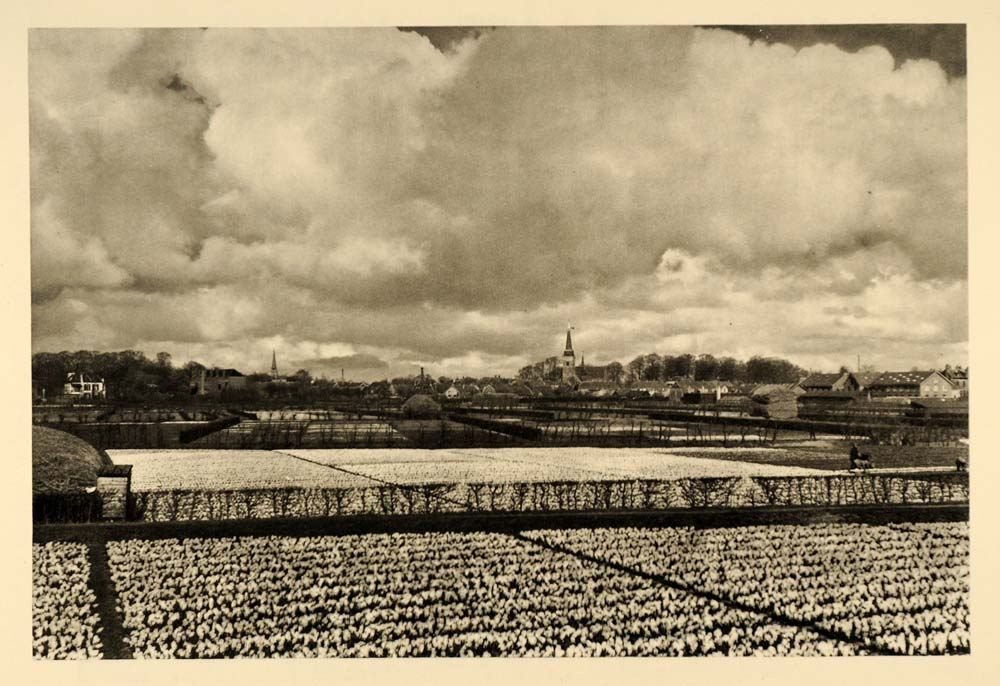 1935 Hyacinth Fields Haarlem The Netherlands Holland - ORIGINAL PTW2